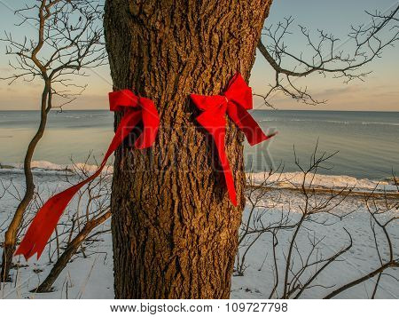 Red Bows On Tree Trunk