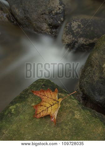 Maple Leaf On Green Rock