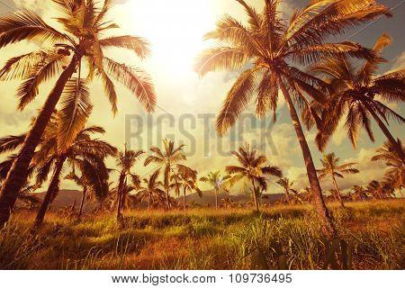 Palm plantation on tropical island