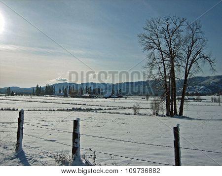 Sparkling snow scene