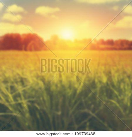 Blurred image of summer landscape at sunset.