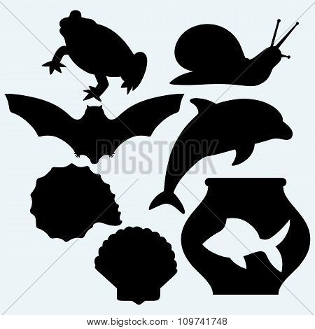 Dolphin jumping, fish in aquarium, frog, bat, garden snail and sea snail