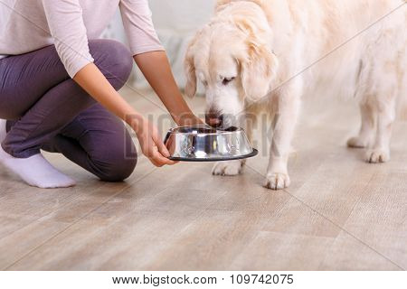Caring woman feeding the dog
