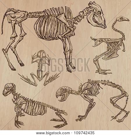 Bones, Skulls, Skeletons - Freehands, Vector
