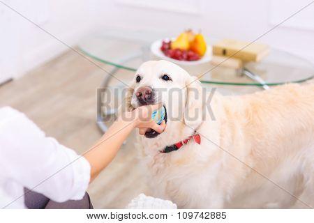 Nice woman playing with her dog