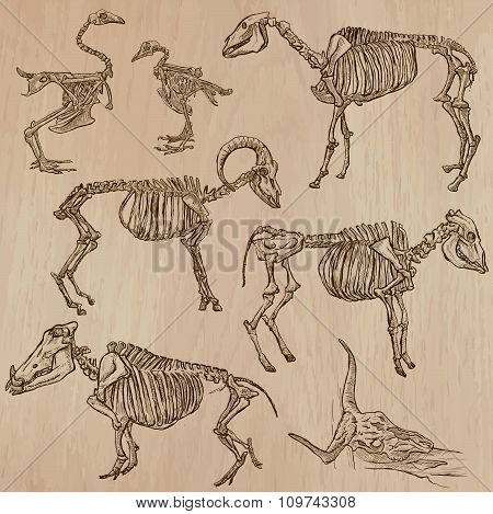 Bones, Skeletons Of Domestic Animals- Freehand, Vector