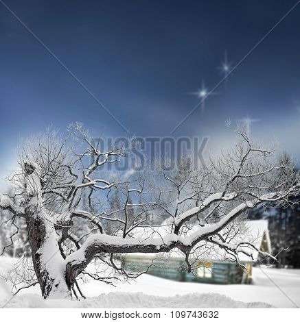 Tree And Log Cabin In Winter