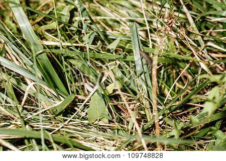Wild Green Grass Background.