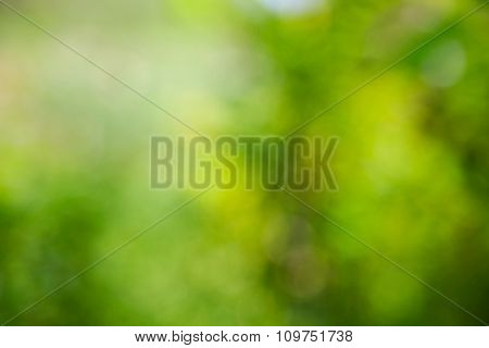 Sunny abstract green nature background, bokeh