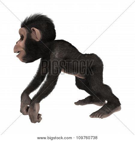 Little Chimp On White