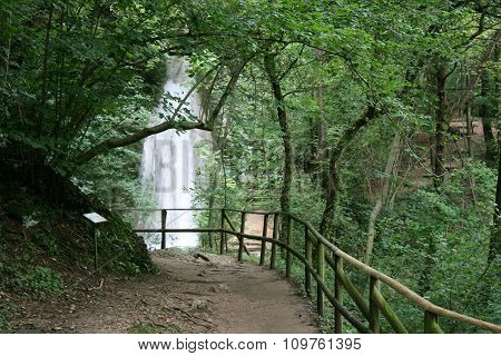 Green Forest with a Waterfall
