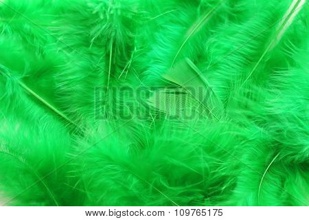 Feather Background, Close  Up