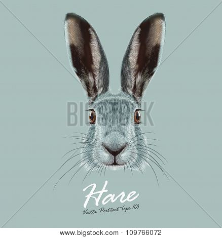 Vector Illustrated Portrait of Hare.