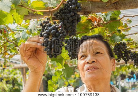 Senior Woman With Grapes Outdoor