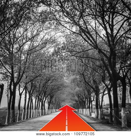 Tree Natural Tunnel On Concrete Road With Red Arrow