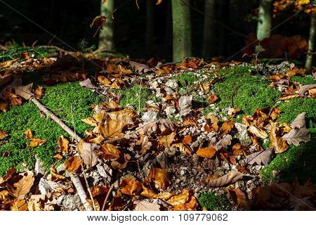 Rusty Autumn Leaves On Green Moss