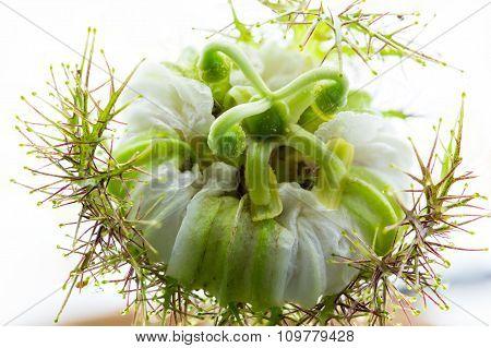 Bloom Flower