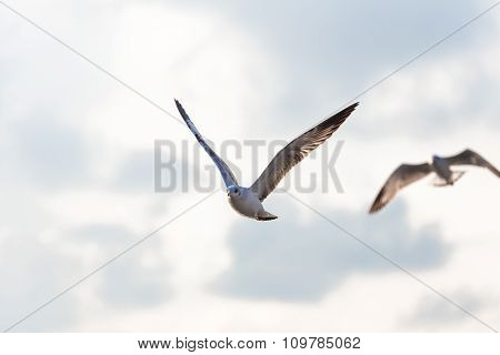 Flying Seagull On Cloudy Sky