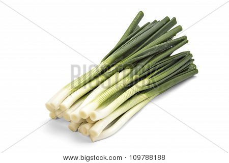 Young spring green onion