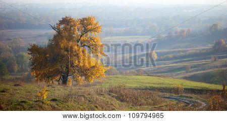 Lonely Big Tree, Yellow Autumn Leaf , Fog