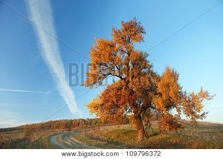 Lonely Big Tree, Yellow Autumn Leaf, Blue Sky