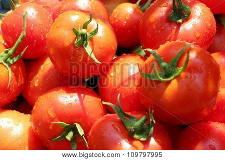 Rich Yield Of Red Tomatoes