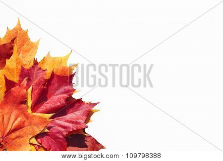 Colorful Autumn Leaves On White
