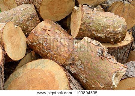 Sawn Pine Logs Heap Closeu View