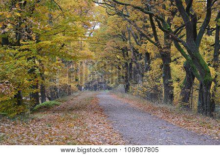 View Autumn Landscape, Southern Bohemia, Czech Republic