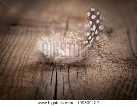 Quail Feather