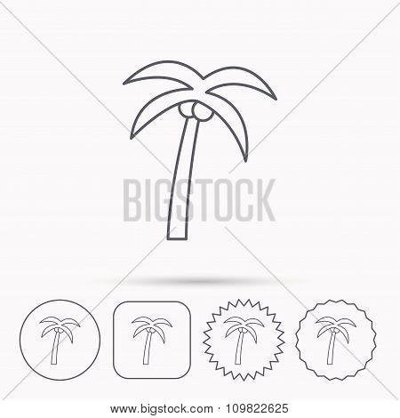 Palm tree icon. Travel or vacation symbol.