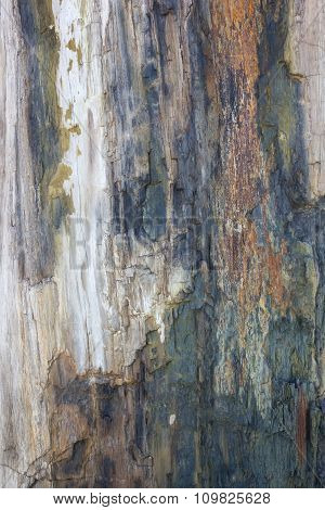 Ancient Petrified Wood Texture Background
