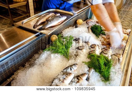 Delicious Fresh fish on ice and human hands