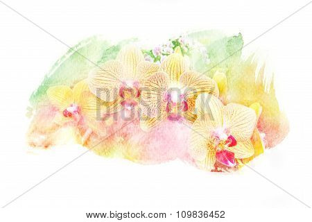 Flower Watercolor Illustration.