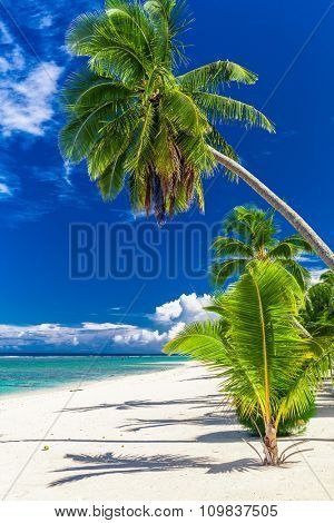 Beautiful palm tree beach on Cook Islands on a hot sunny day