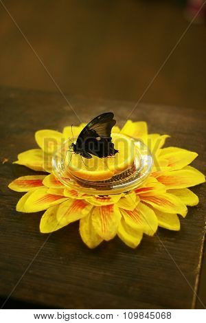 Black butterfly on the orange slice with flower