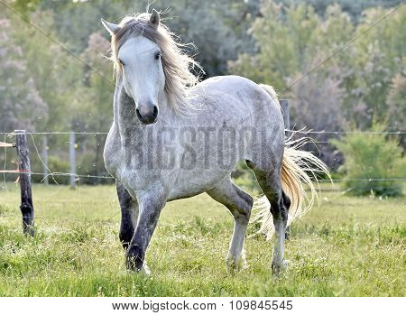 White Horse Portrait On Natural Background. Close Up