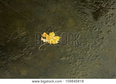 Yellow Maple Leaf Frozen In The Frozen River.horizontal.