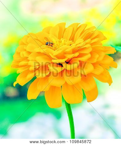 Lower Bloom Plant Shine Sweet Colorful Sunshine Beautiful With Bee In Garden Country Background.