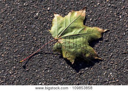 Autumn Maple Leaf On Pavement