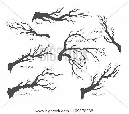 set of dried branches of trees