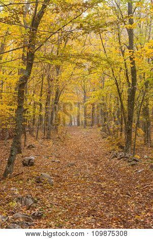 Earth road in Crimean beech-wood forest