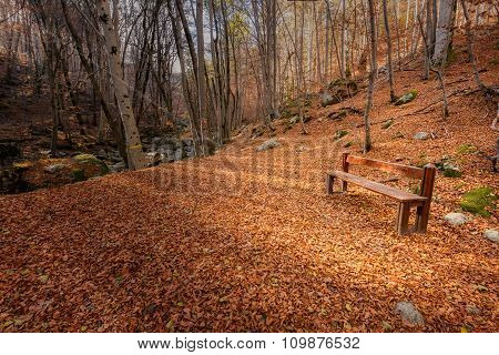 Wooden Bench Surrounded By Autumn Leaves In A Forest In Corsica
