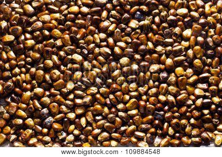 Roasted Corn Background