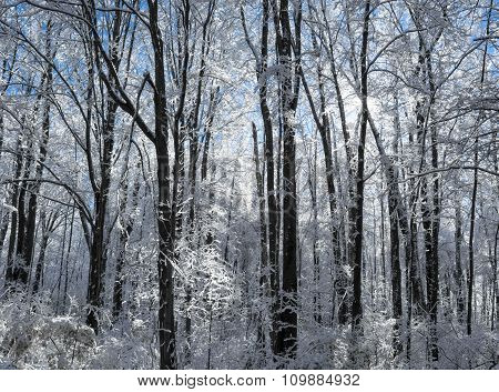Snowy Winter Forest Scene