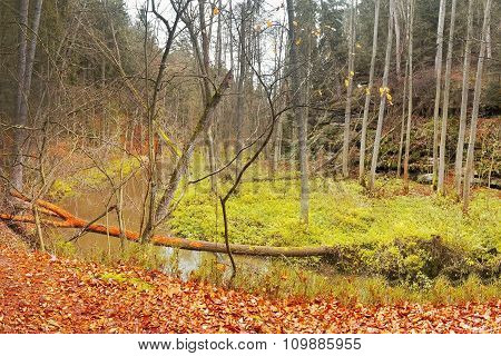 'robecsky Potok' Creek In 'peklo' Valley After Rain In The Autumnal Afternoon