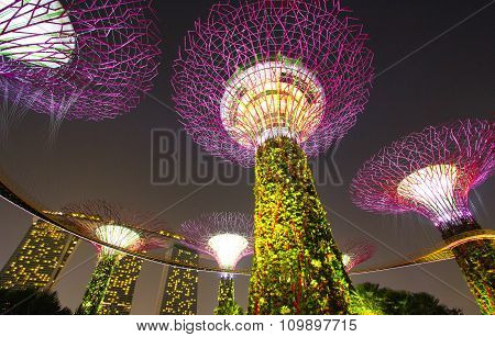 Supertree garden at night, garden by the bay
