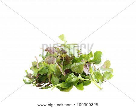 Red Green Watercress Organic Salad Ingredient