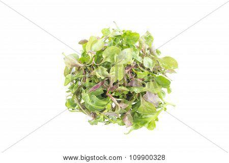 Mix Watercress Salad Ingredient Top View
