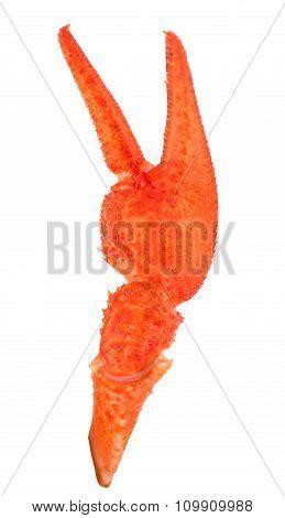 Claw Crayfish